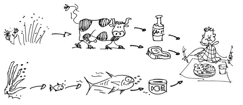 Substances dangereuses la chaine alimentaire